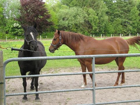Pferde - Zweisamkeit