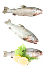 Raw trout fish collection isolated on white background