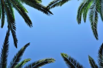 Palm postcard