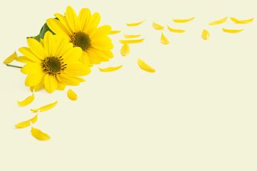 Sonnenblumenblüten und -blütenblätter