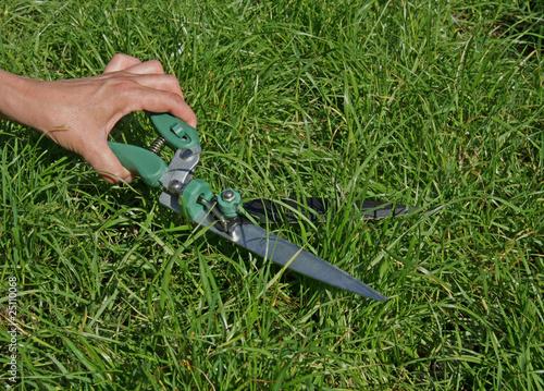 Tonte gazon avec ciseaux photo libre de droits sur la for Tonte pelouse tarif