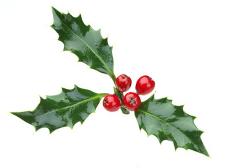 christmas holly and red berries