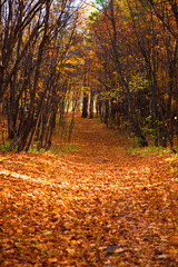 Path in the autumn forest.