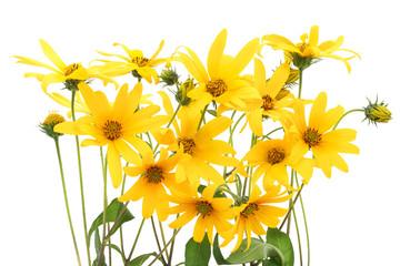 Topinambur yellow flowers background