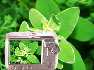 Flower displayed on the screen of the camera.