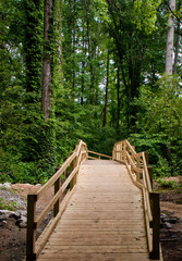 Wood Walkway Through a Green Forest