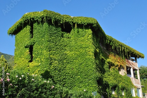 Casa ricoperta di edera rampicante stock photo and for Edera rampicante