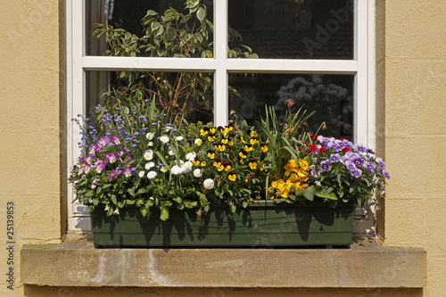 Fensterbank Mit Blumen Veilchen Vergissmeinnicht Stock Photo And