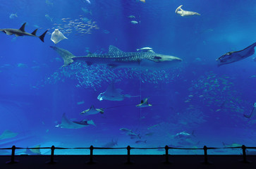 aquarium with whale shark