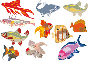 eleven color fishes