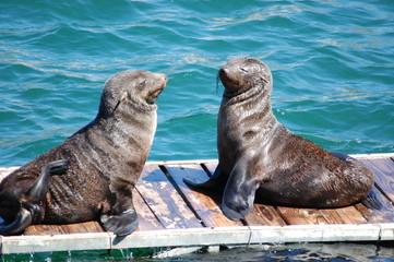 seals in capetown