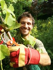 vigne taillée par un jardinier vigneron