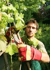 vigne travaillée par un jardinier vigneron jovial