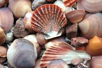 Shells part 2