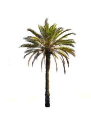 Photo sur cadre textile Palmier le palmier