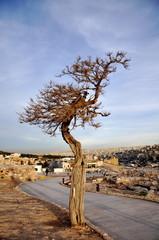 Colored barren tree