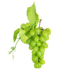 Grape cluster over white