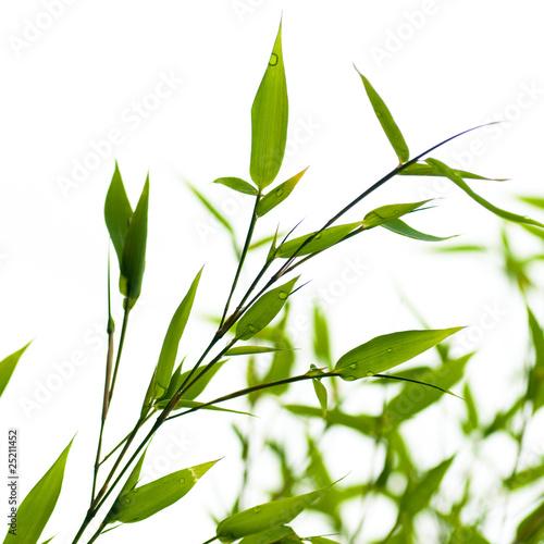 image d 39 un bambou vert sur fond blanc nature photo libre de droits sur la banque d 39 images. Black Bedroom Furniture Sets. Home Design Ideas