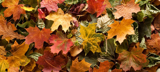 Colourful autumn background