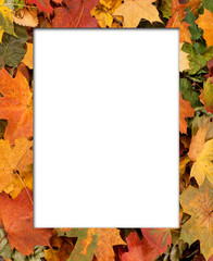 Autumn background with a blank space in the middle