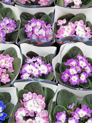 Fototapete - Blumenverkauf Lila
