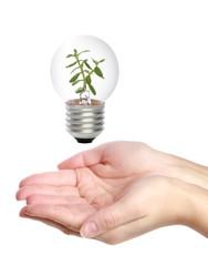 Hands holding light bulb