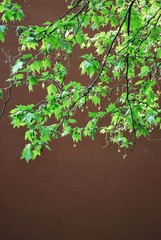 Green leaves on brown background, free copy space