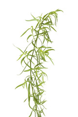 Sprig of fresh tarragon