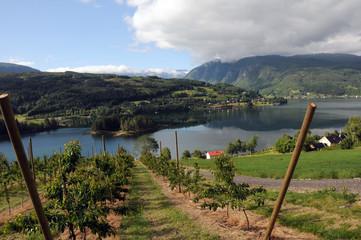 Farmland around Hardangerfjord, Norway