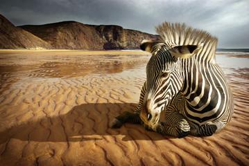 Obraz Zebra plażowa - fototapety do salonu