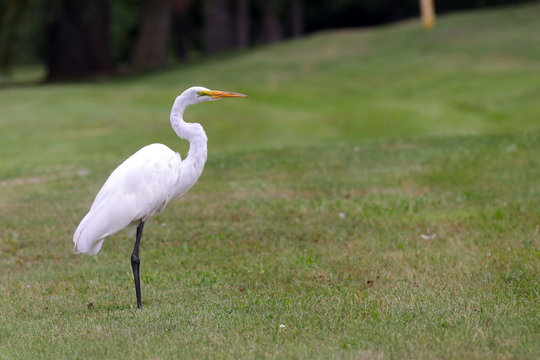 Beautiful tropical crane in the middle of meadow