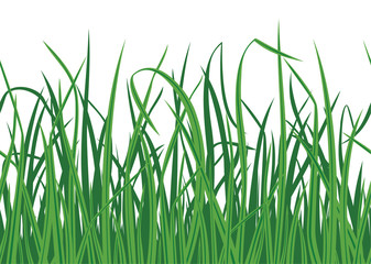 Grass background with seamless edge. Vector