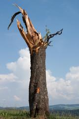 Baumstamm nach Sturm