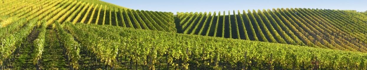 Panorama viticole Fototapete