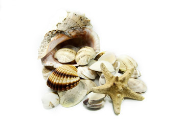 sea shell sea star and white background