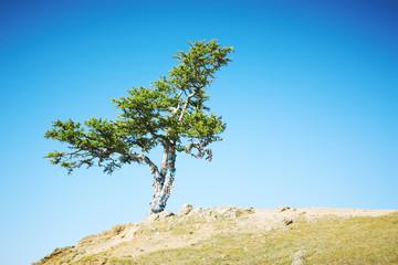 Tree growing at mountain top