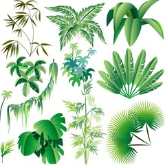 Poster Draw Piante e Vegetazione Tropicale-Exotic Plants and Trees-Vector