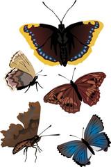 set of five different butterflies