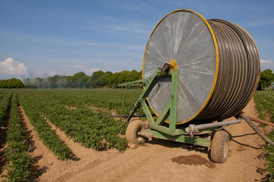 Arrosage d'un champ de pommes de terres