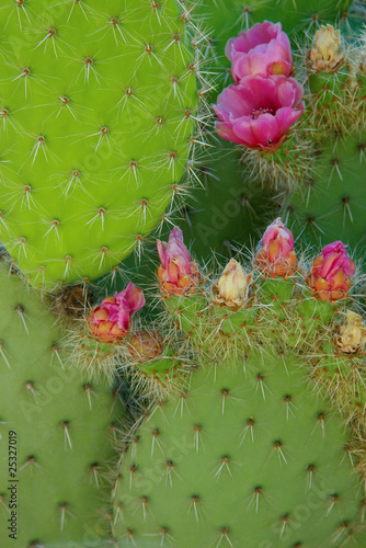 cactus leaves and flowers composition stock photo and royalty free images on. Black Bedroom Furniture Sets. Home Design Ideas