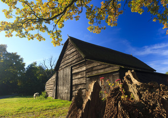 Autumn landscape with barn and goat