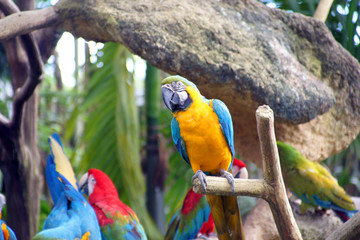 Parrots in rainforest.