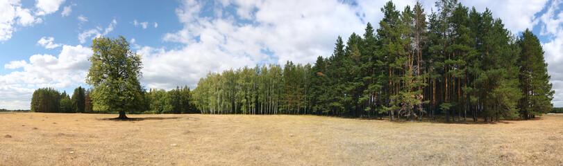 russia summer landscap - forest