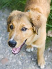 hund vierbeiner Haustier