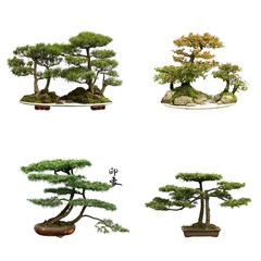 collection of the best china bonsai with white isolated backgrou