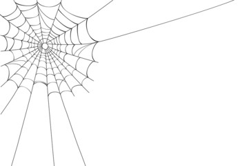 Vector Spider web on white - Vector EPS AI 8