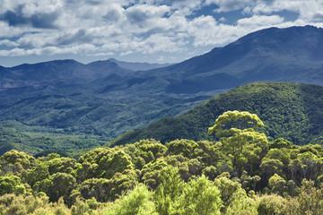 australia rain forest