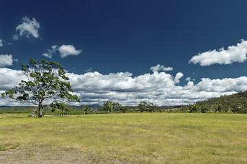 australia meadow