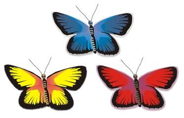 butterflies in color