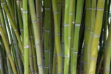 Bamboo tree stand